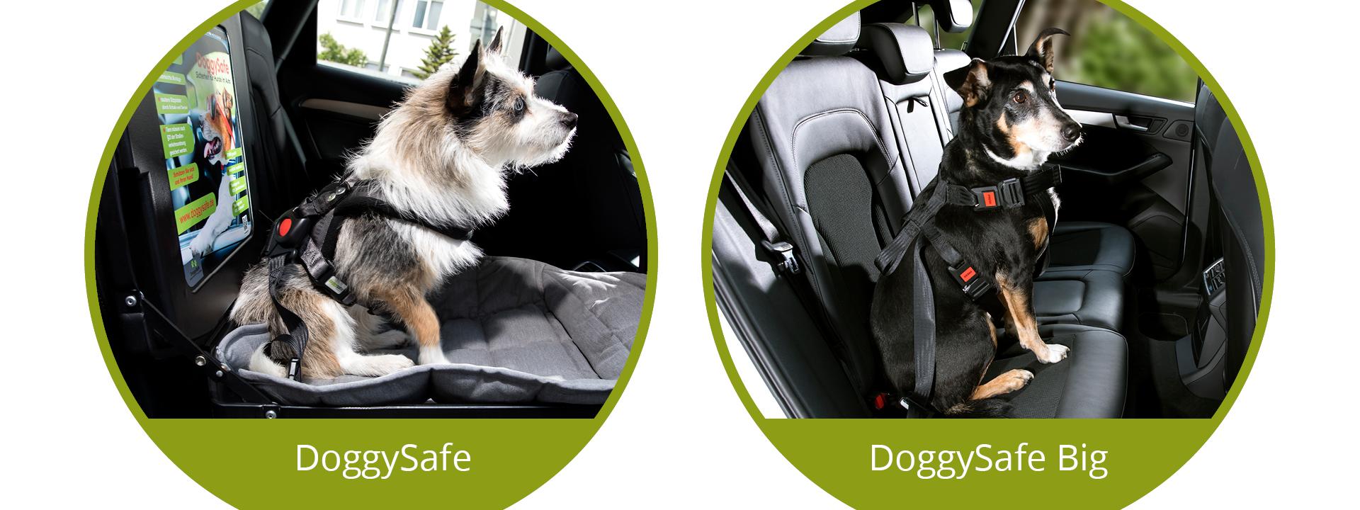 DoggySafe - Sicherheitsgurtsysteme