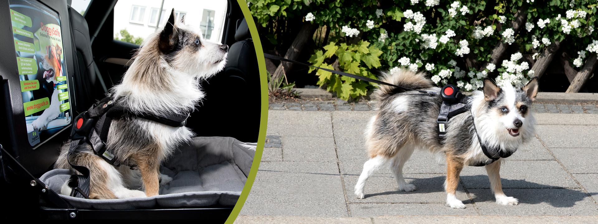 DoggySafe - Hundegeschirr und Autositz für kleine Hunde