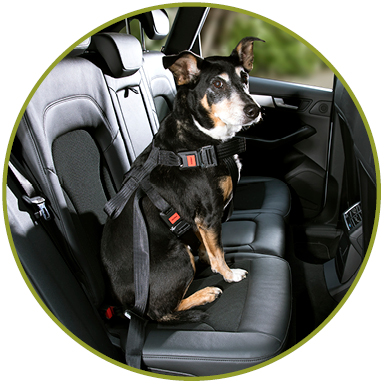 hunde sicherheitsgurt systeme f r das auto doggysafe. Black Bedroom Furniture Sets. Home Design Ideas