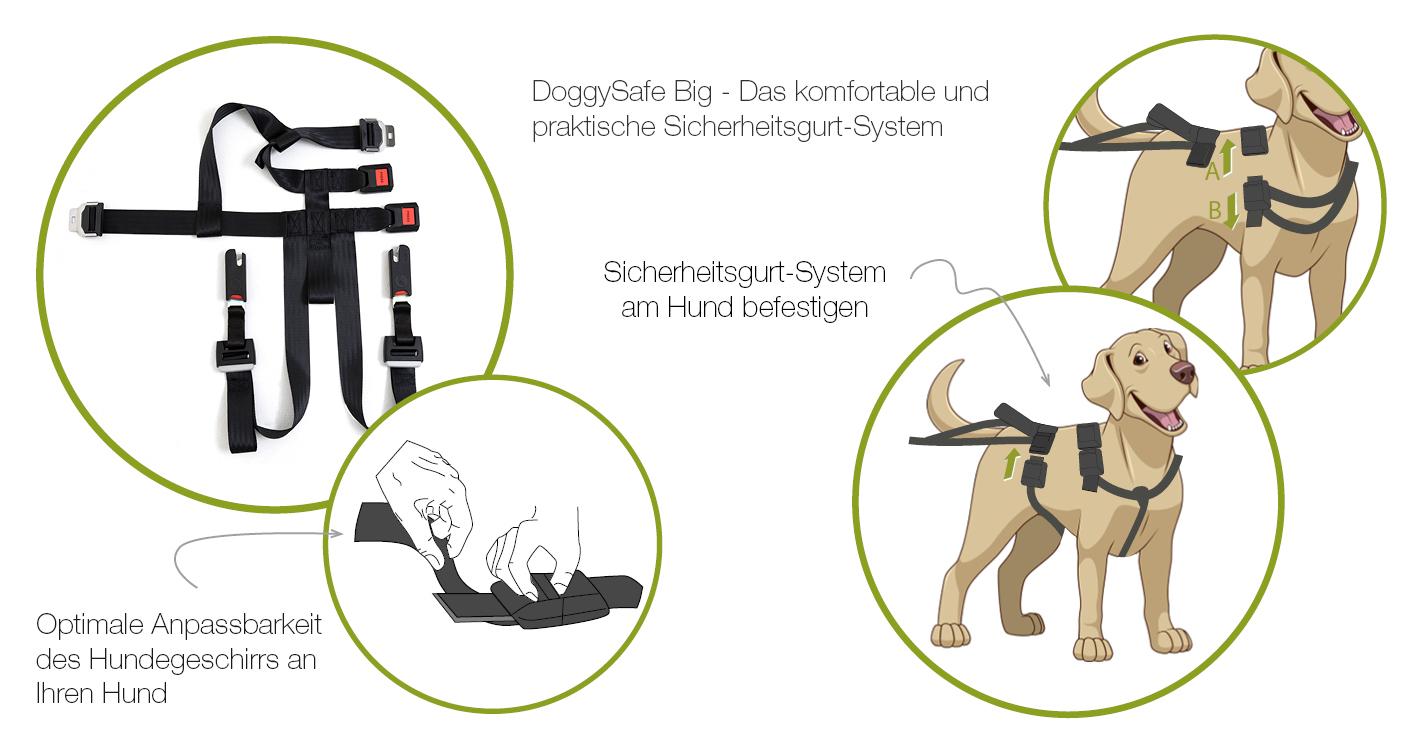 doggy-save-storyx1420x900-landingpage-schritt-1