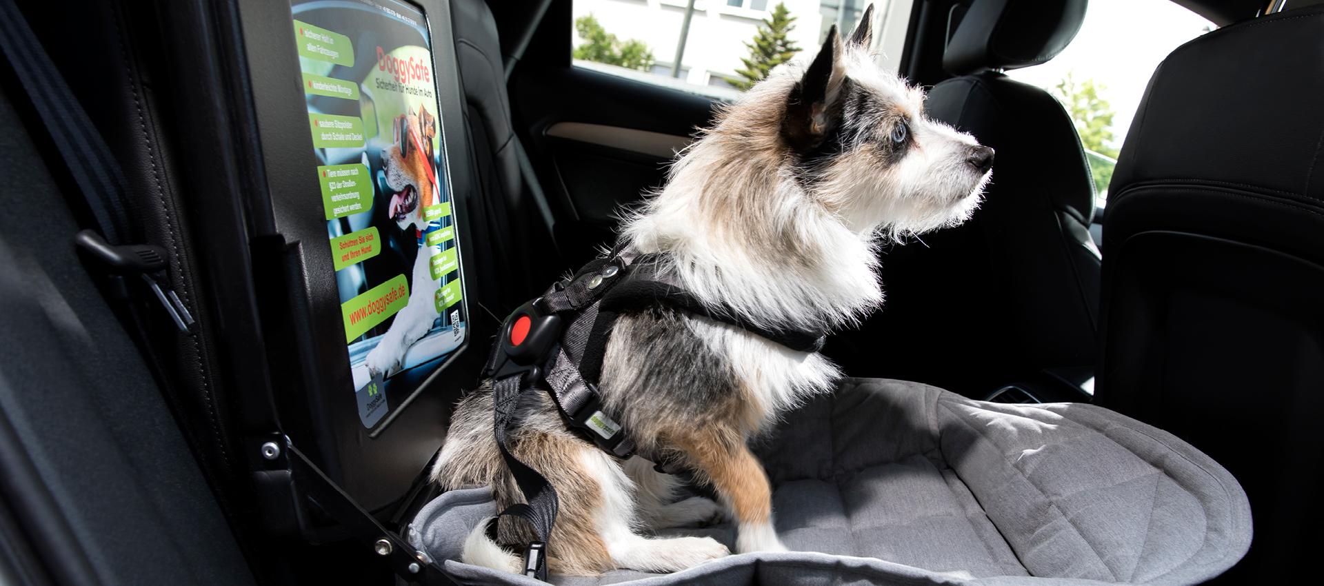 DoggySafe - Hunde Autositz für kleine Hunde - Darstellung im Auto