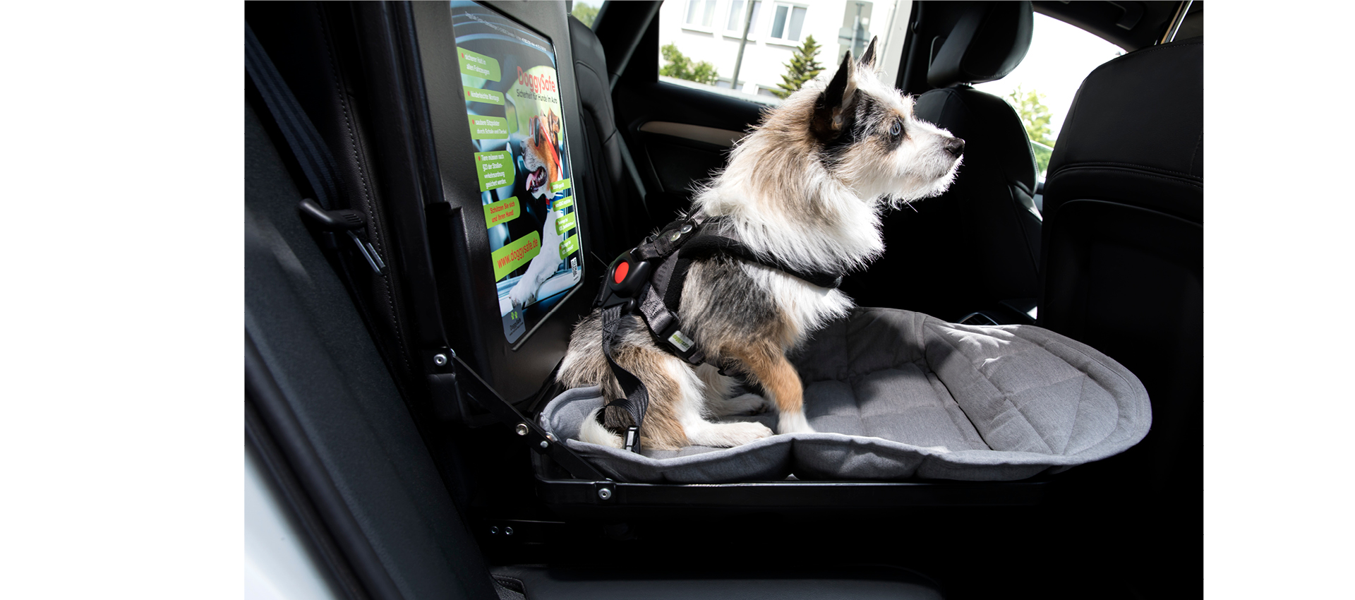doggysafe sicherheit komfort f r hunde im auto. Black Bedroom Furniture Sets. Home Design Ideas