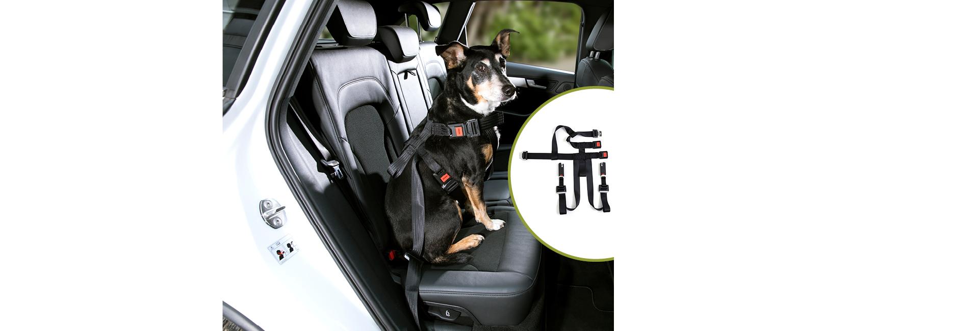 DoggySafe - Hunde Sicherheitsgurt Set für Rückbank