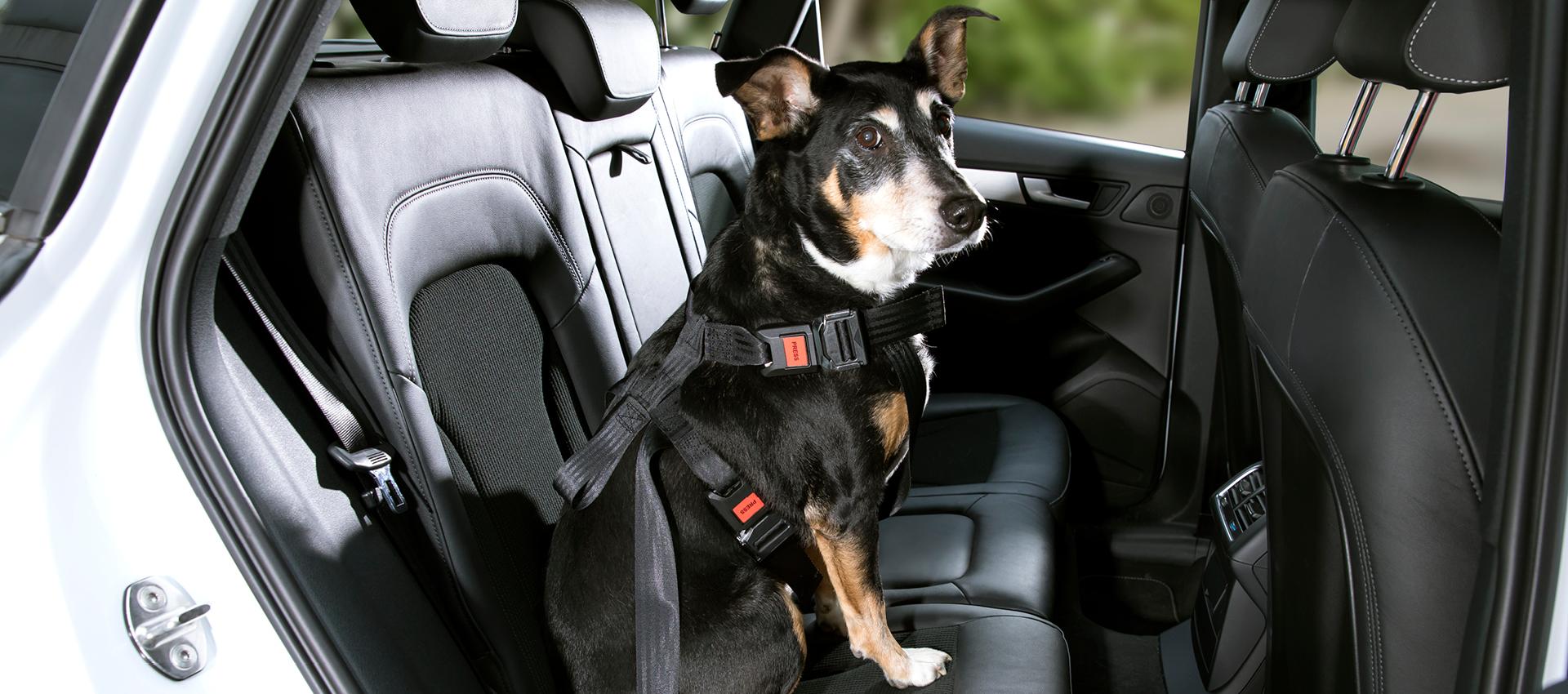 DoggySafe - Hunde Sicherheitsgurt Set für größere Hunde (Rückbank)
