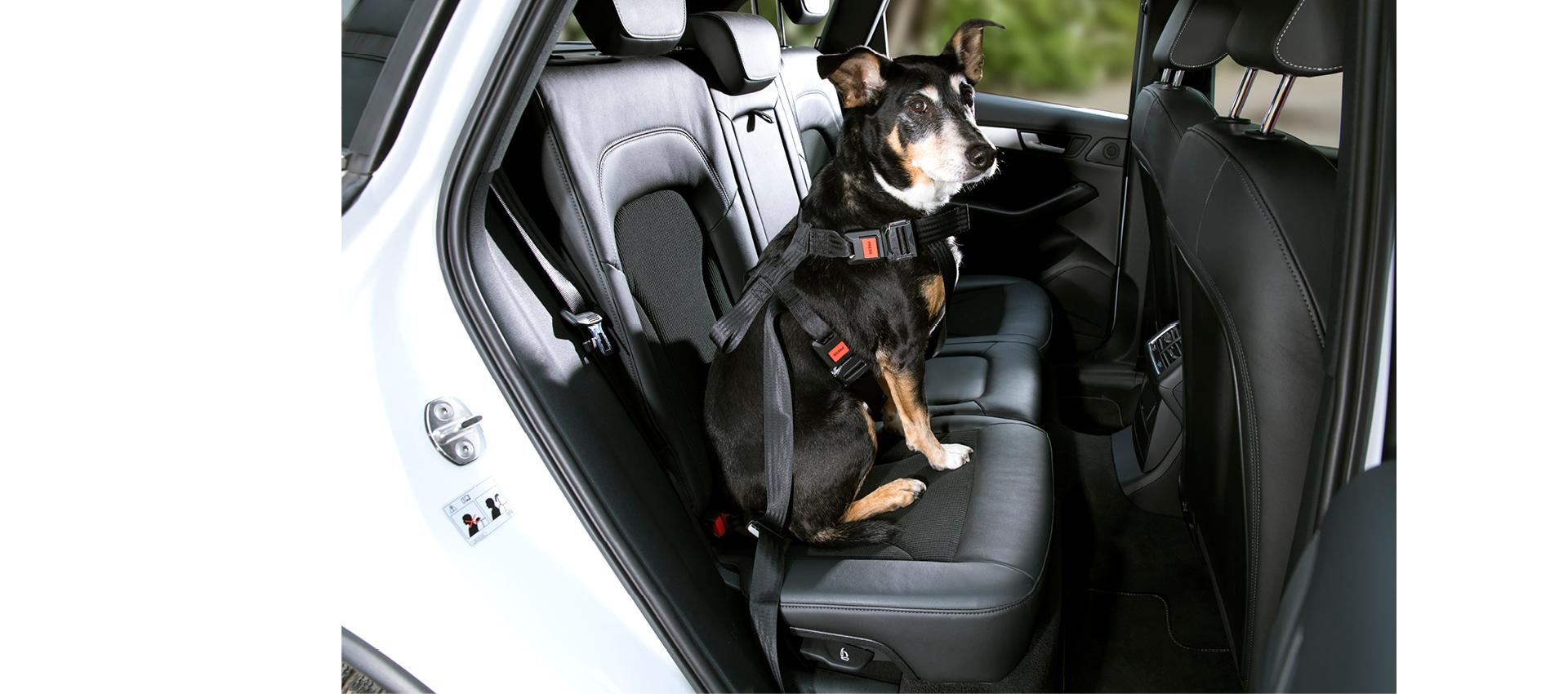 DoggySafe - Hunde Sicherheitsgurt Set anpassbar für größere Hunde (Rückbank)