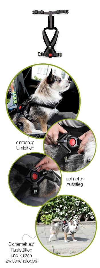 DoggySafe - Sicherheitsgurtsystem für kleine Hunde - Funktionsdarstellung